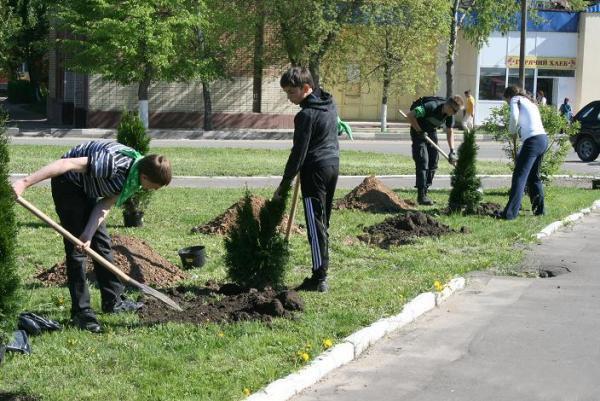 Зачем вдоль дорог сажают деревья 59
