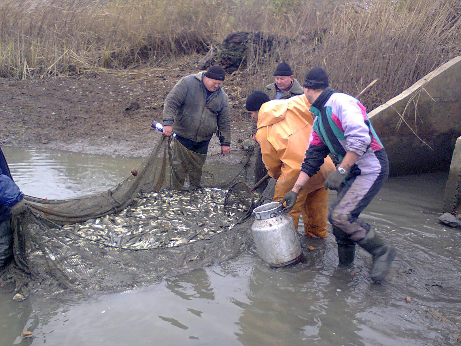 Сколько нужно рыбы для зарыбления пруда