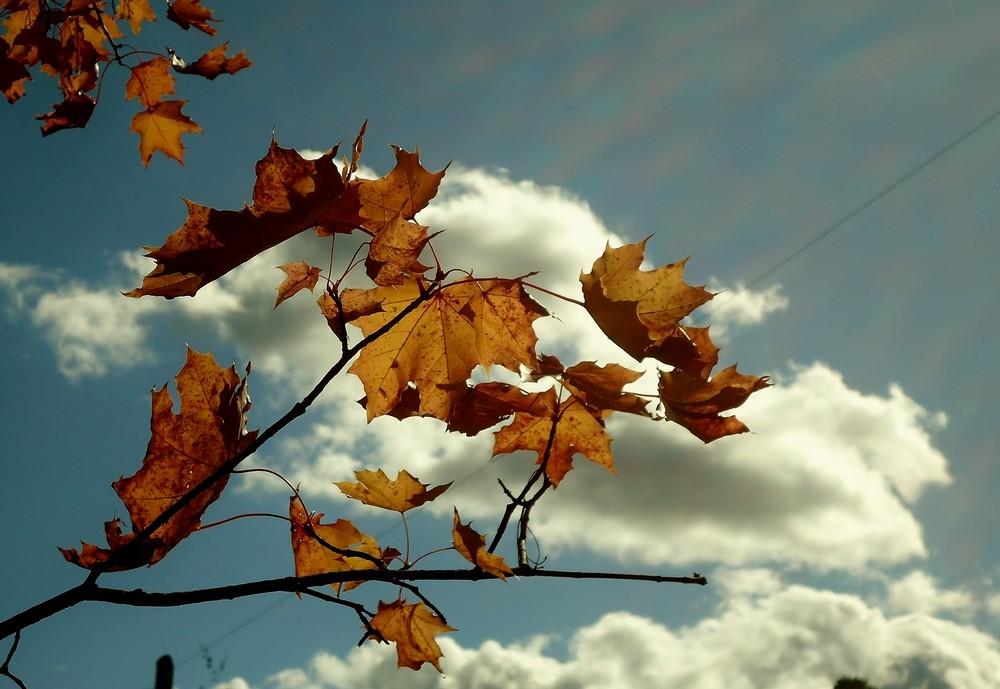 реке картинка погода на осень решил