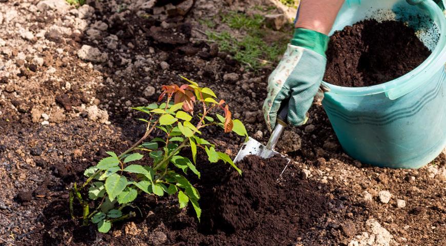 В Дубоссарах продолжаются работы по озеленению | Новости Приднестровья