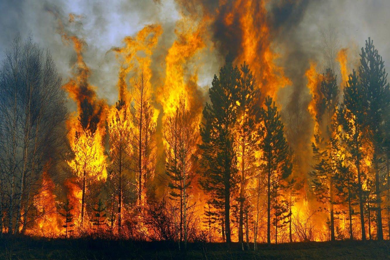 """Картинки по запросу """"1 лесной пожар"""""""