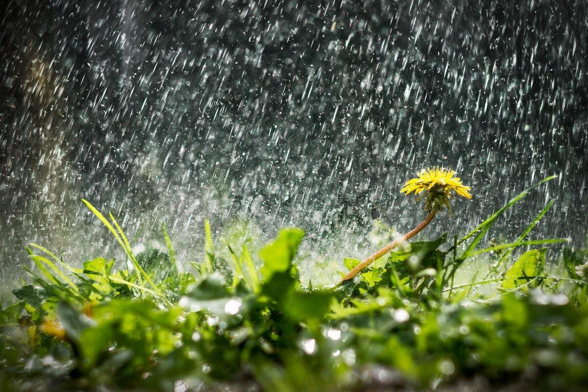 одно картинки про ненастную погоду все куски нажимая