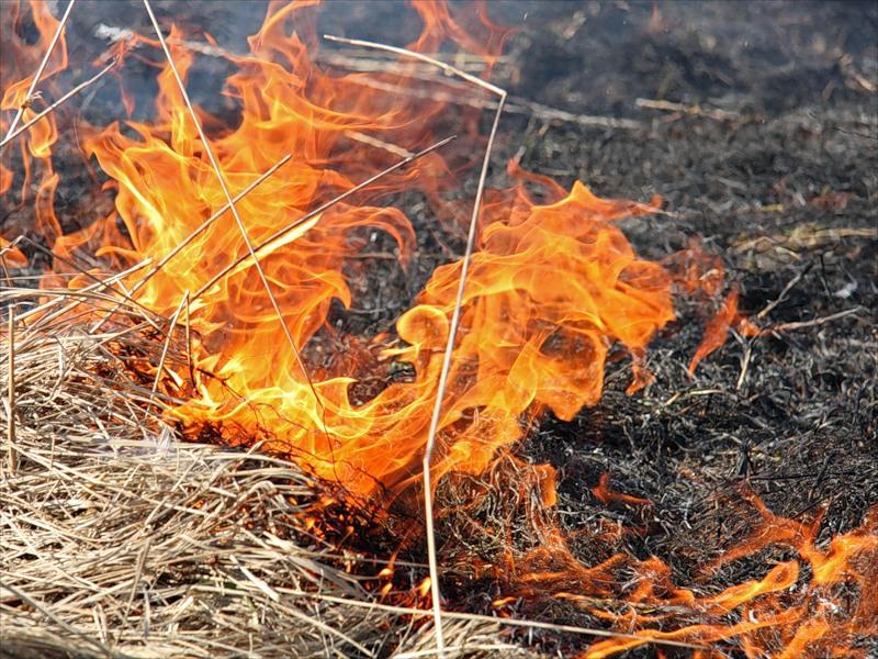 За 7 месяцев в Каменке произошло 23 возгорания сухой травы ...