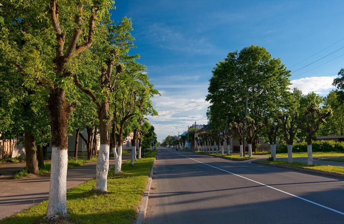 таком картинки деревьев на улицах считается длина