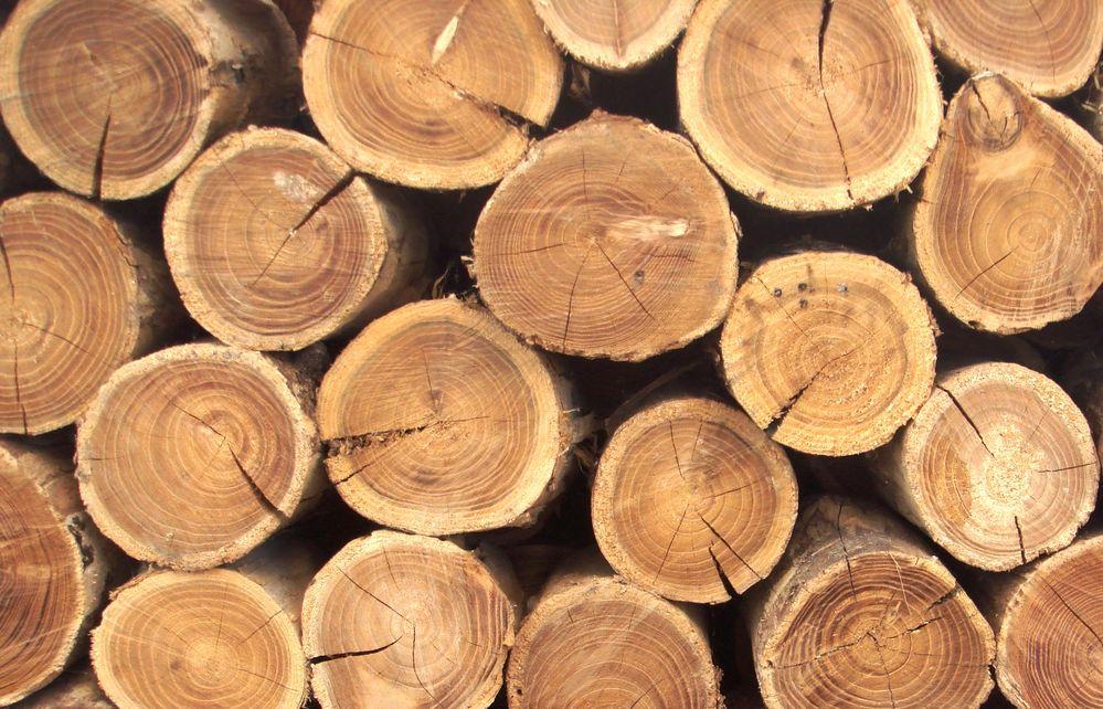 В Приднестровье вводится запрет на вывоз древесины и изделий из неё