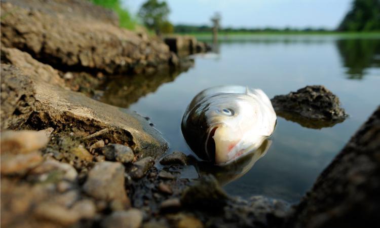 Власти решили не запрещать лов больной рыбы под Мурманском