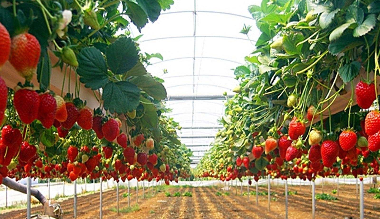 Теплицы: овощеводство и цветоводство, гидропоника и 82