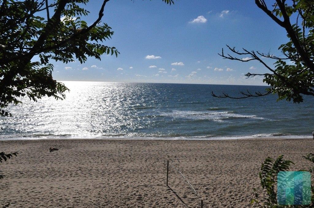 Ученые: Черное море стало значительно чище