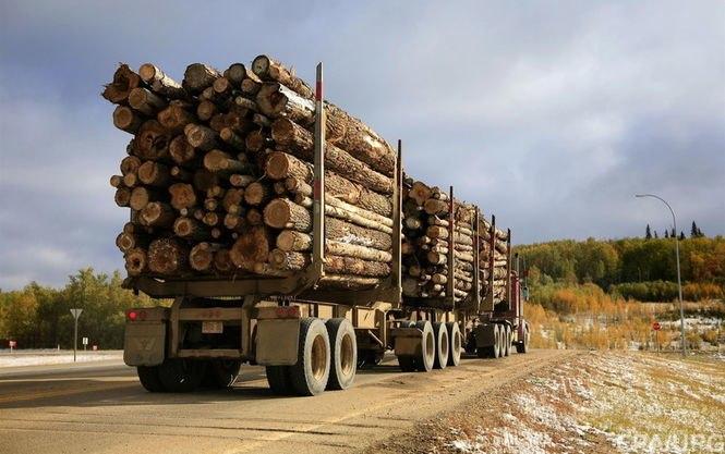 ВЕС пояснили позицию относительно экспорта леса-кругляка