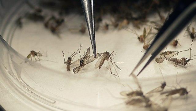 Открыты 26 новых видов насекомых, переносящих вирус Зика