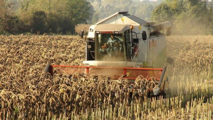 Уборка зерновых вВоловском районе почти завершена