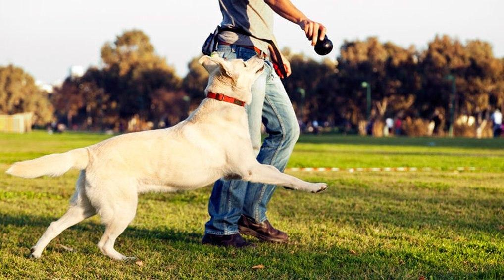 Собаки помогают справиться сострессом вовремя сессии— Канадские ученые