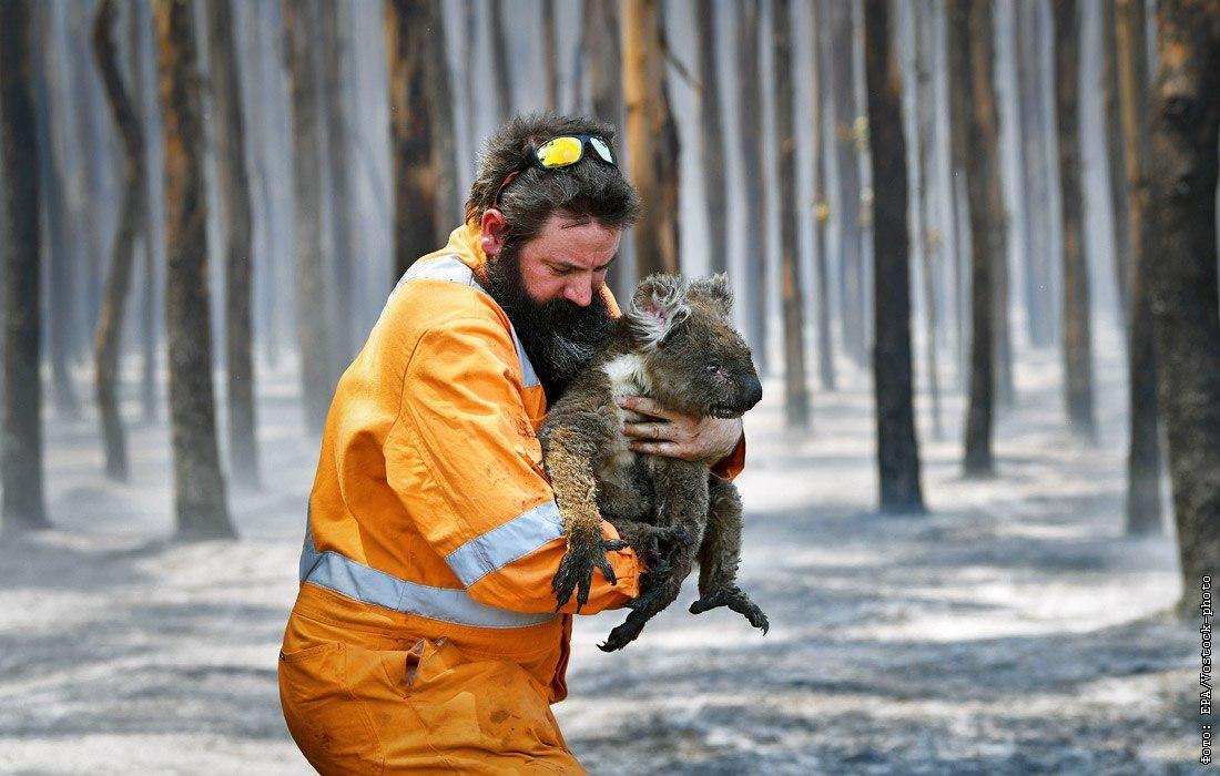 В Австралии после масштабных лесных пожаров в экстренной помощи нуждаются более 100 видов животных.