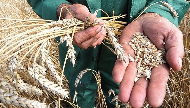 Виюле-октябре 2016г.Украина увеличила экспорт зерна на6%