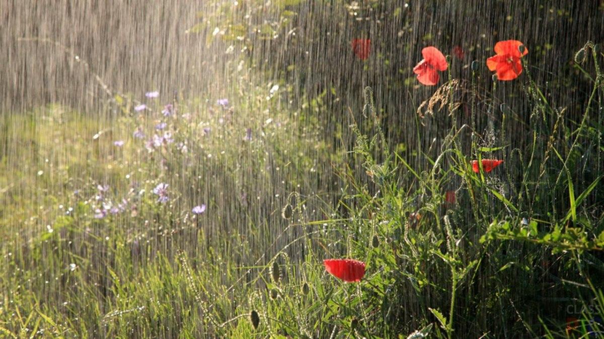 В российской столице предполагается теплая погода с маленькими дождями