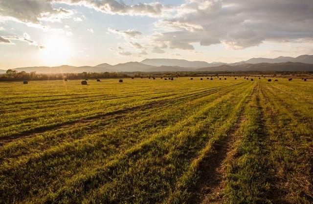 Липчане подают заявки, чтобы получить бесплатный гектар на далеком Востоке