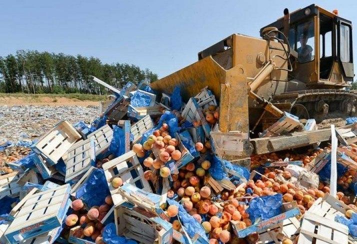 Руководство продлило срок уничтожения санкционных продуктов доконца 2017-ого
